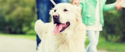Helfer in der Not: Epilepsiehund