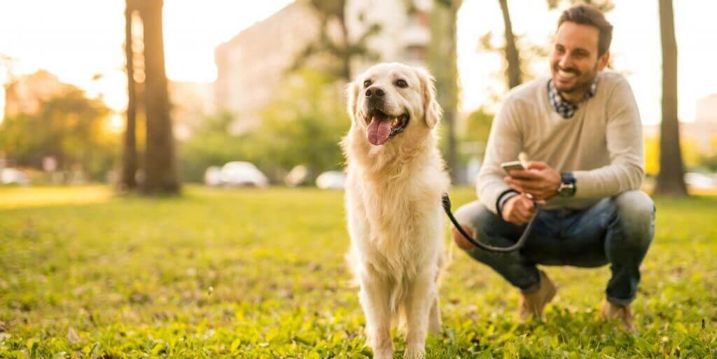 Tier Hund Betreuung Steuer absetzen