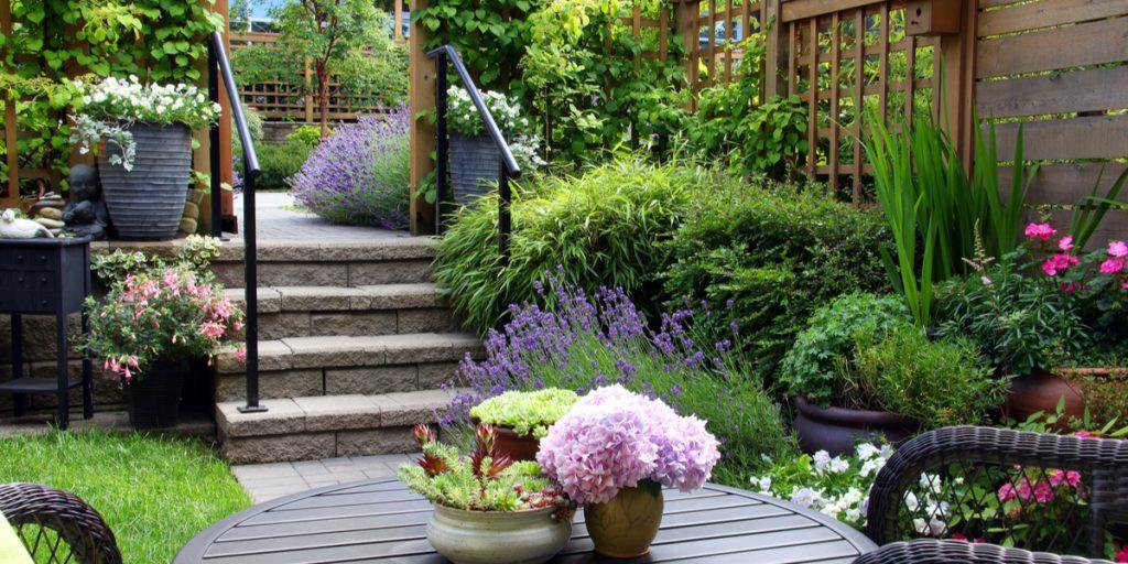 Pflanzen für den neuen Garten
