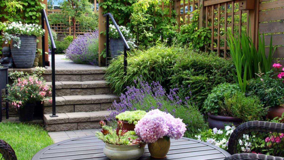 Pflanzen für den Garten   Mit der grünen Oase Umsatzsteuer sparen