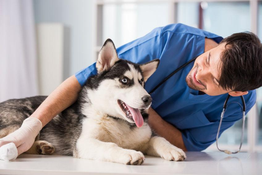 verbraucherblick 01/2016 Versicherungen für Hunde