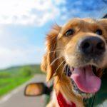 verbraucherblick 05/2017 Haustiere im Urlaub