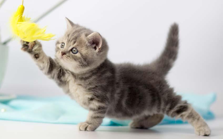 Katzenspielzeug selbst gemacht