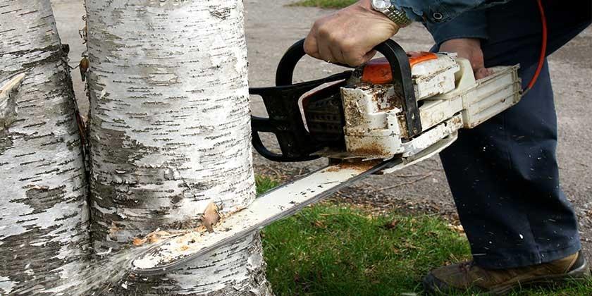 Berühmt Muss der Mieter die Kosten für Baumfällarbeiten tragen? KD79