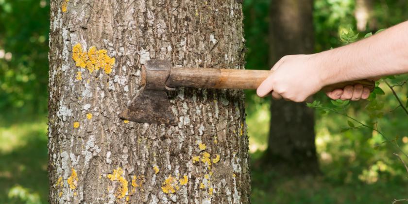 Wenn der Baum fällt
