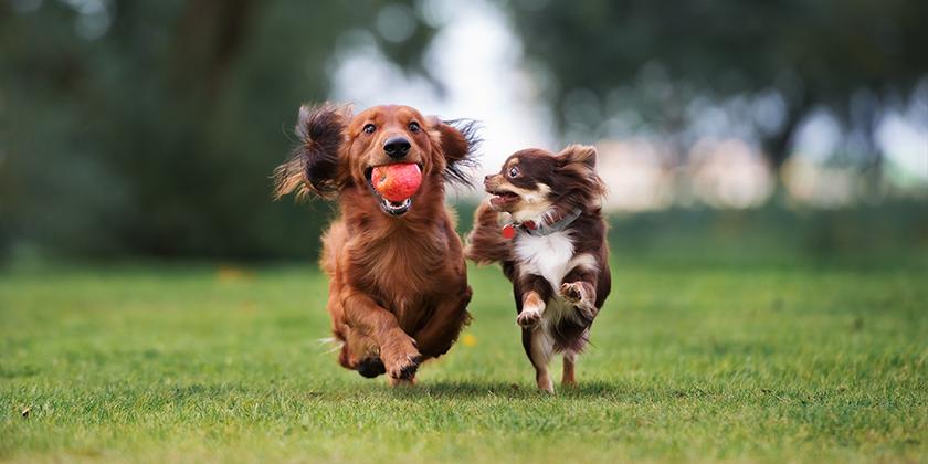 Trotz Abmahnung: freilaufende Hunde – fristlose Kündigung