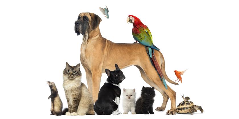 Tierhaltung Im Mietrecht Was Ist Erlaubt Und Was Nicht