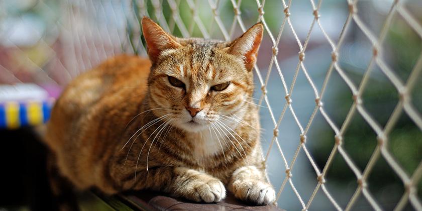 Katzennetz am Balkongeländer erlaubt?