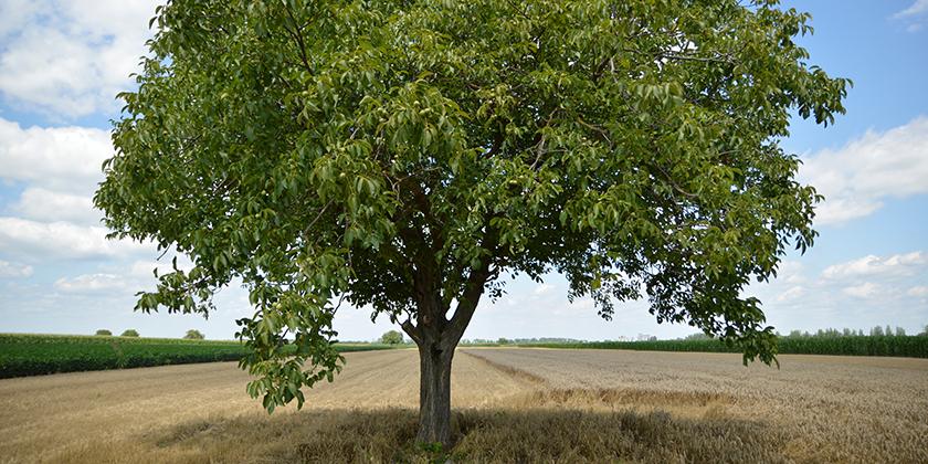 Astkürzung und Rückschnitt von Bäumen